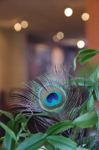 peacock feather 2009-09-20 IMGP7299